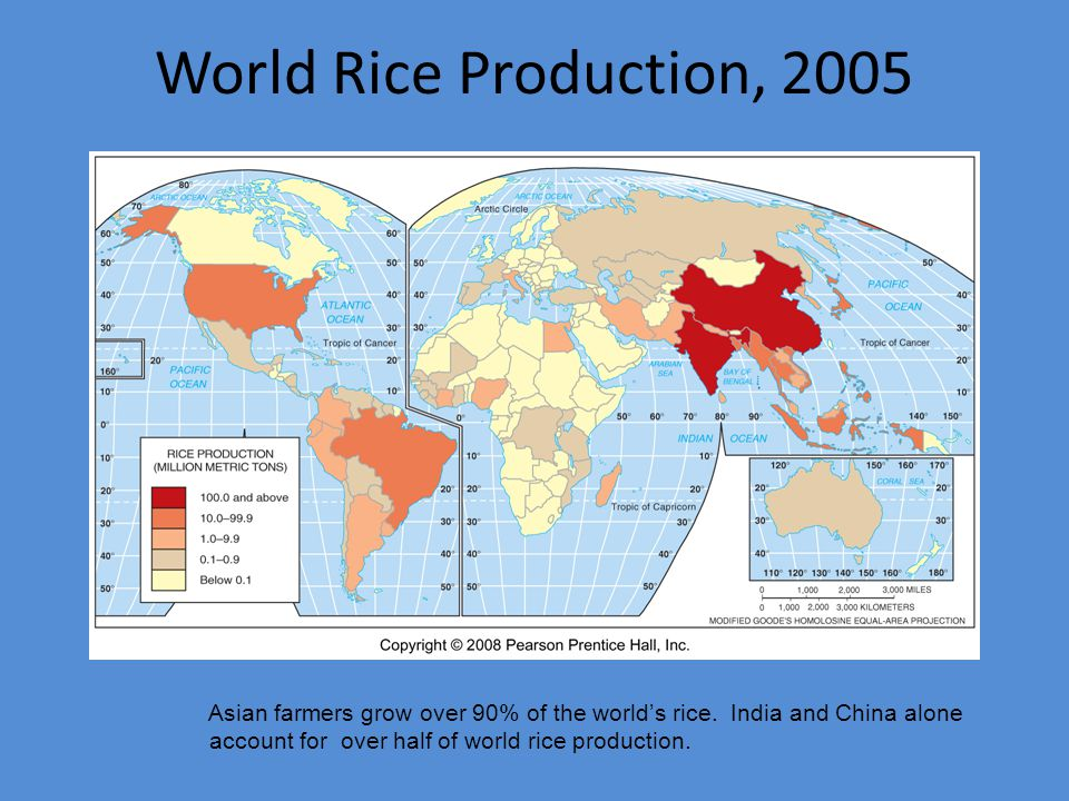 World Rice Production, 2005 Asian farmers grow over 90% of the world's rice.