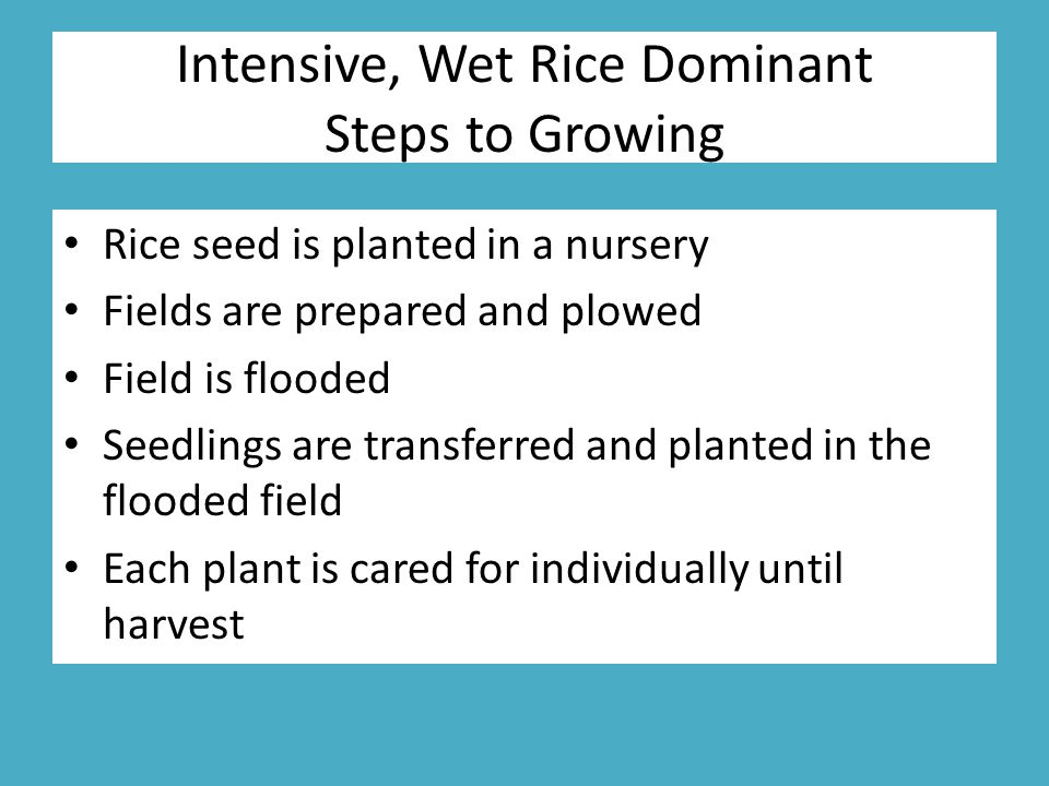 Intensive, Wet Rice Dominant Steps to Growing