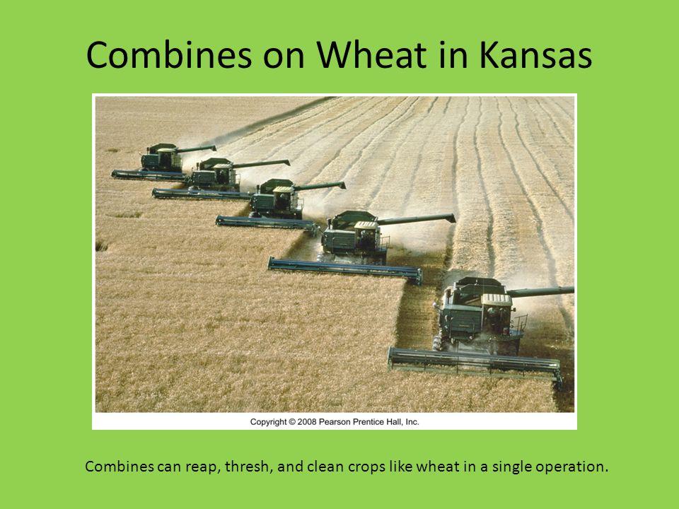 Combines on Wheat in Kansas