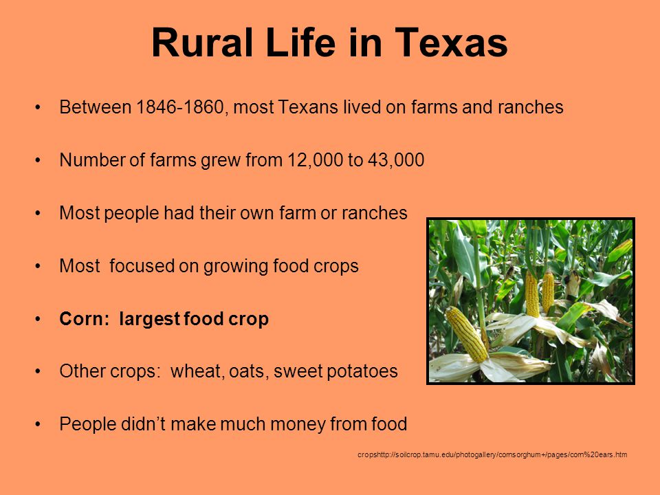 Rural Life in Texas Between 1846-1860, most Texans lived on farms and ranches. Number of farms grew from 12,000 to 43,000.