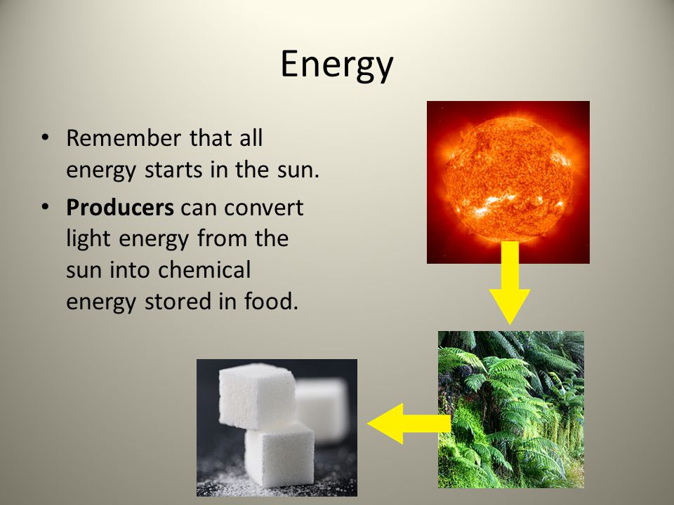 Energy Remember that all energy starts in the sun.