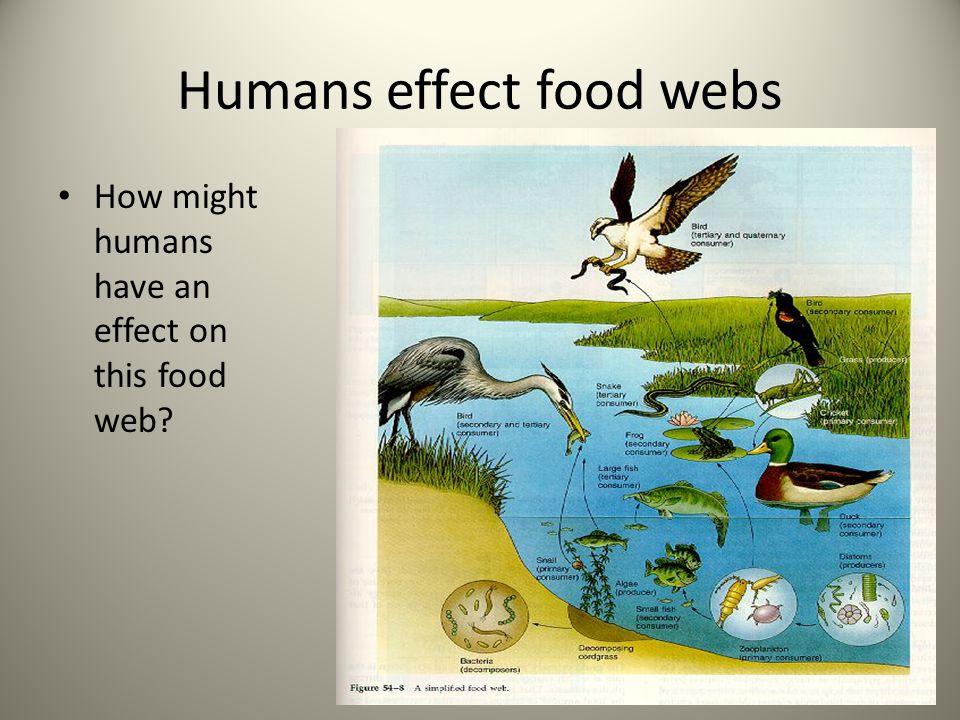Humans effect food webs