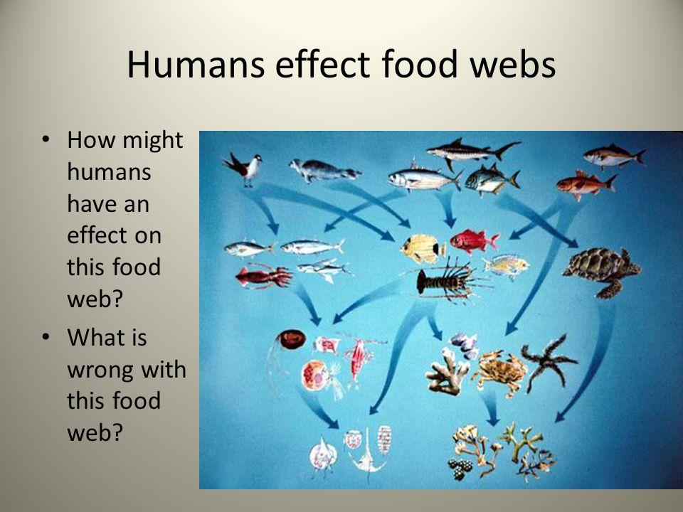 Humans effect food webs