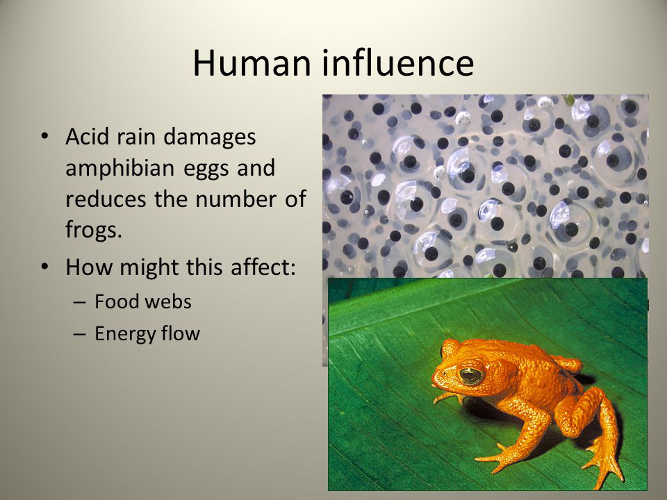 Human influence Acid rain damages amphibian eggs and reduces the number of frogs. How might this affect: