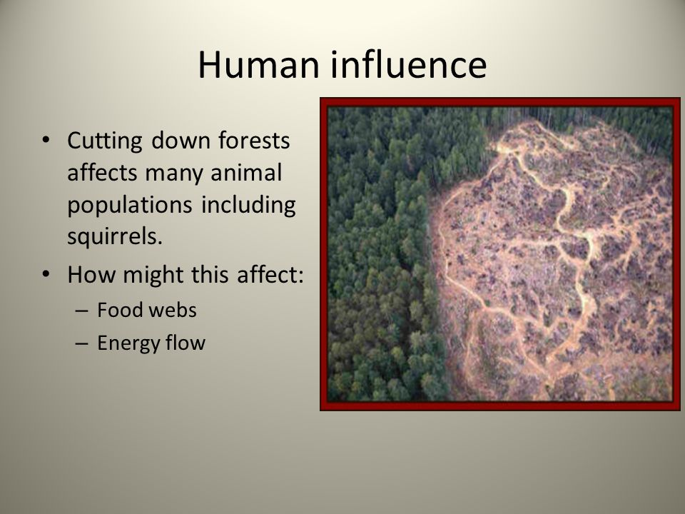 Human influence Cutting down forests affects many animal populations including squirrels. How might this affect: