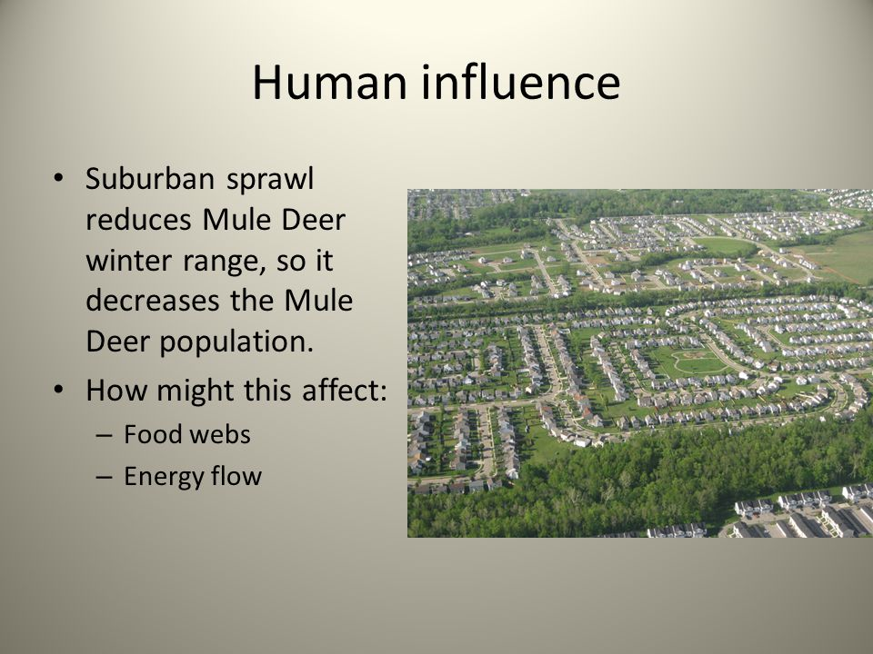 Human influence Suburban sprawl reduces Mule Deer winter range, so it decreases the Mule Deer population.