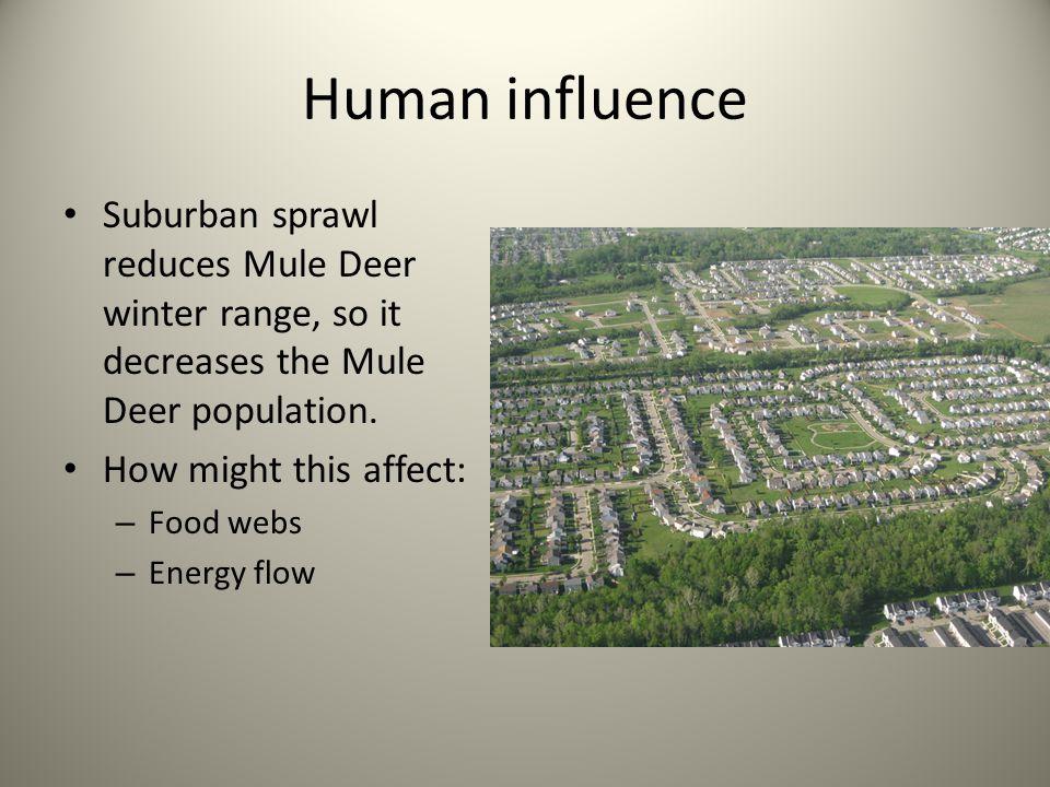 Human influence Suburban sprawl reduces Mule Deer winter range, so it decreases the Mule Deer population.