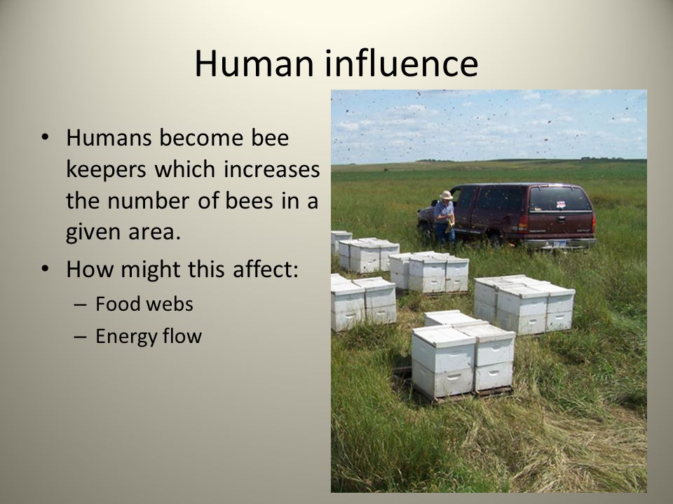 Human influence Humans become bee keepers which increases the number of bees in a given area. How might this affect: