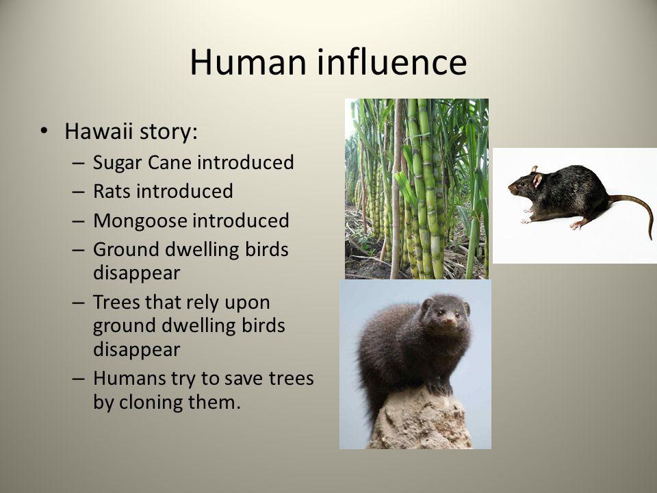Human influence Hawaii story: Sugar Cane introduced Rats introduced