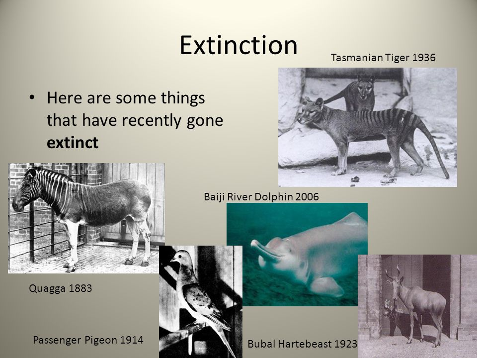 Extinction Here are some things that have recently gone extinct