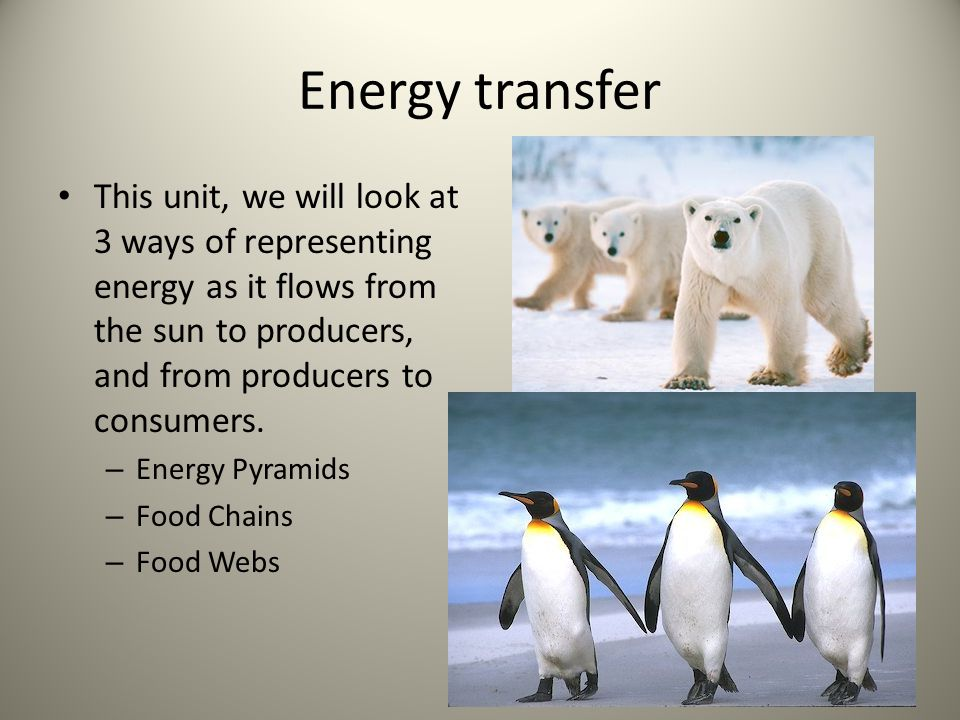 Energy transfer This unit, we will look at 3 ways of representing energy as it flows from the sun to producers, and from producers to consumers.