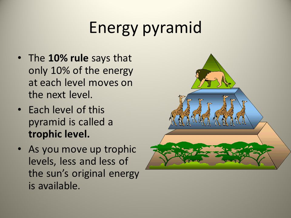 Energy pyramid The 10% rule says that only 10% of the energy at each level moves on the next level.