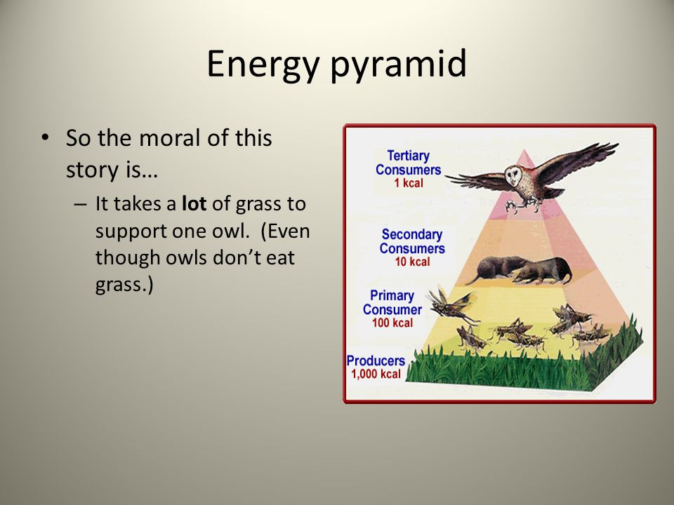 Energy pyramid So the moral of this story is…