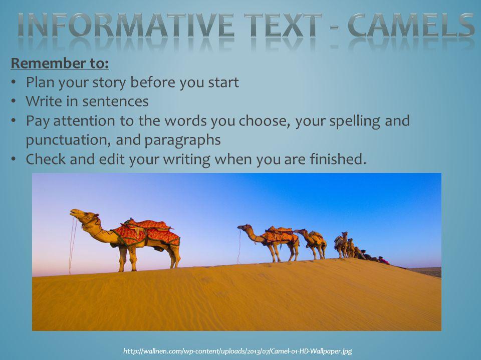Informative text - Camels