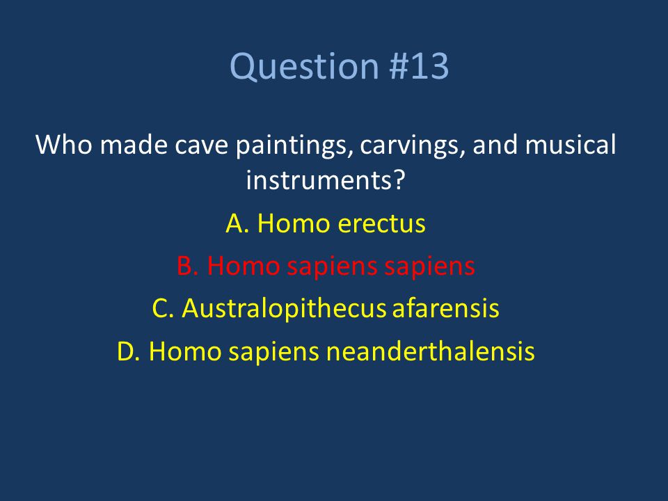 Question #13 Who made cave paintings, carvings, and musical instruments A. Homo erectus. B. Homo sapiens sapiens.
