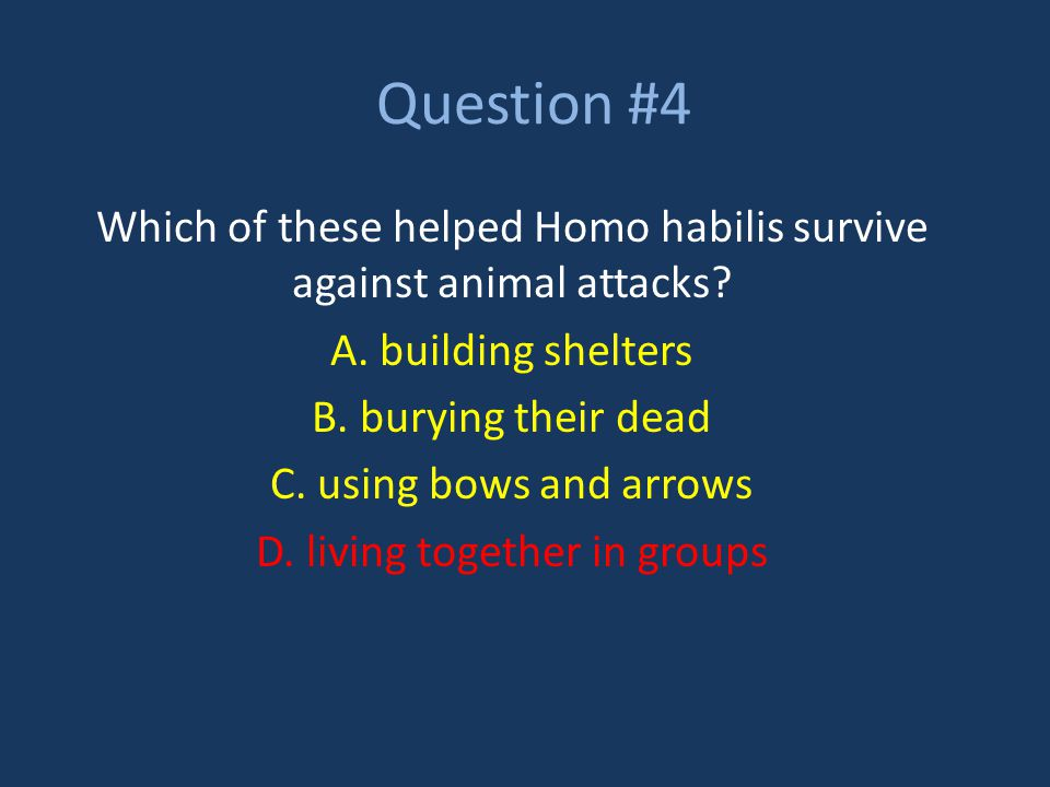 Question #4 Which of these helped Homo habilis survive against animal attacks A. building shelters.