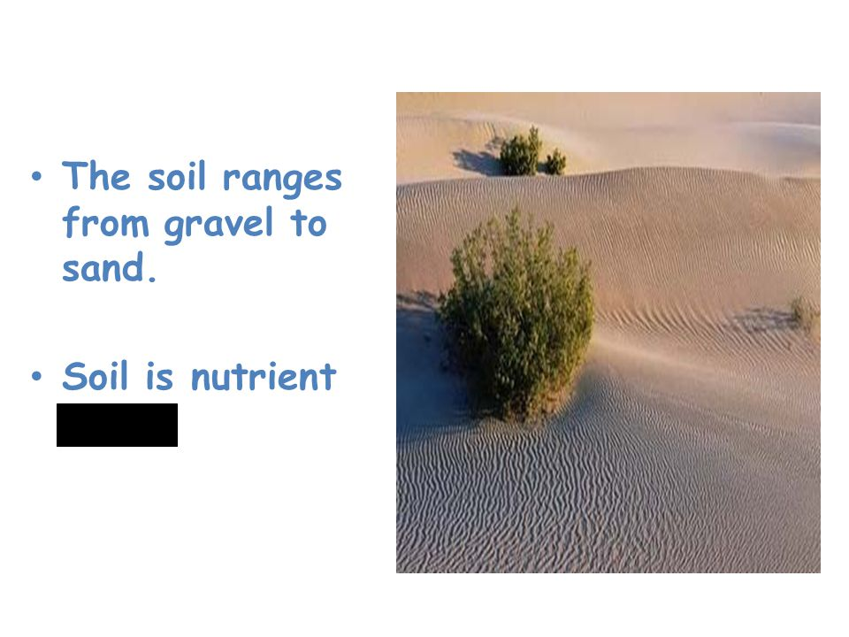 Desert The soil ranges from gravel to sand. Soil is nutrient poor.