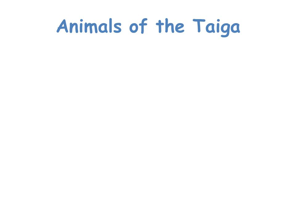 Animals of the Taiga Many animals live in the Taiga.