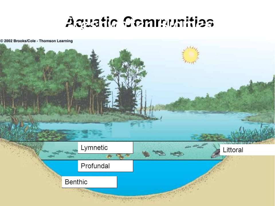 Freshwater Biomes Aquatic Communities Lymnetic Littoral Profundal