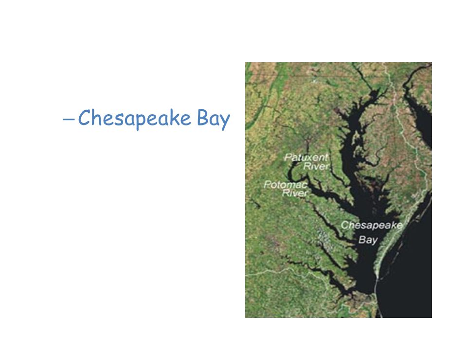 Saltwater Estuaries Chesapeake Bay