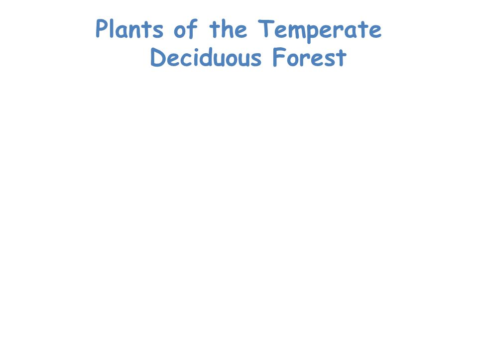 Plants of the Temperate Deciduous Forest