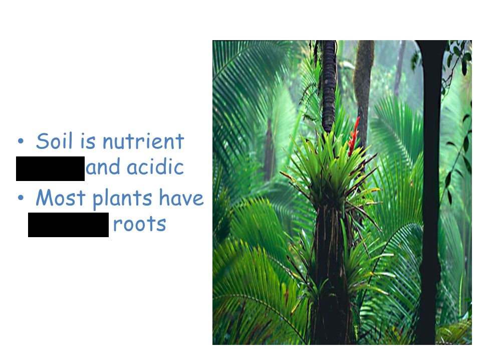 Tropical Rain Forest Soil is nutrient poor and acidic