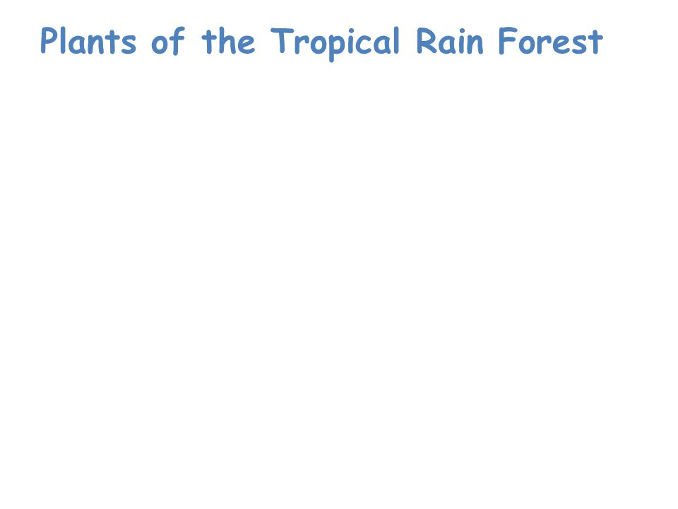 Plants of the Tropical Rain Forest