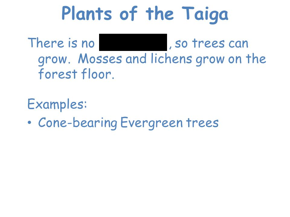 Plants of the Taiga There is no permafrost, so trees can grow. Mosses and lichens grow on the forest floor.