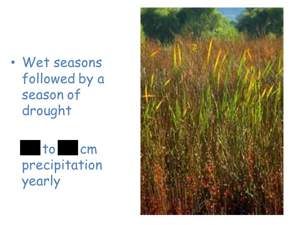 Grassland Wet seasons followed by a season of drought