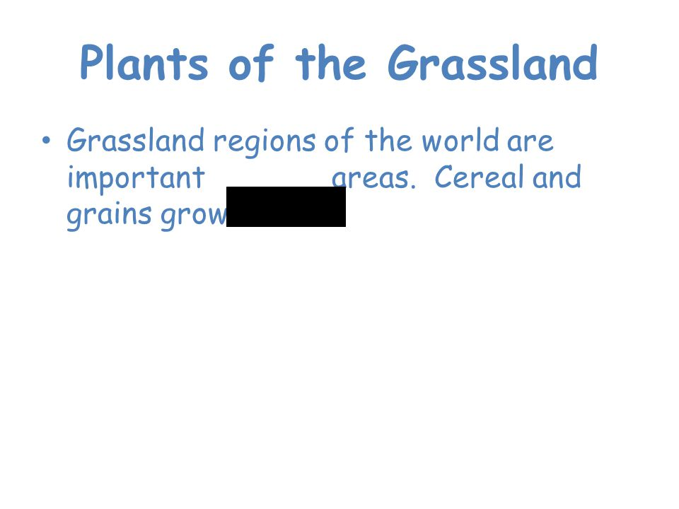 Plants of the Grassland