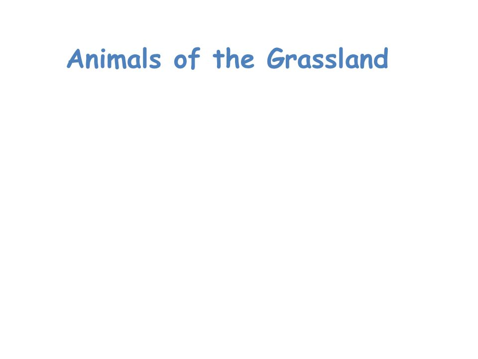 Animals of the Grassland