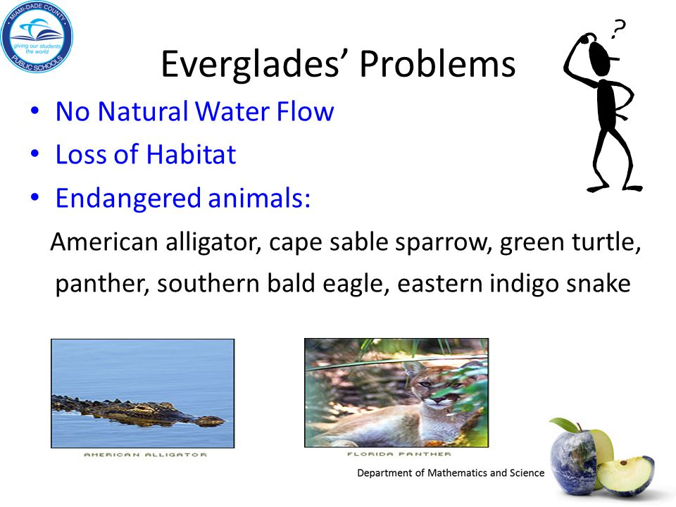 Everglades' Problems No Natural Water Flow Loss of Habitat