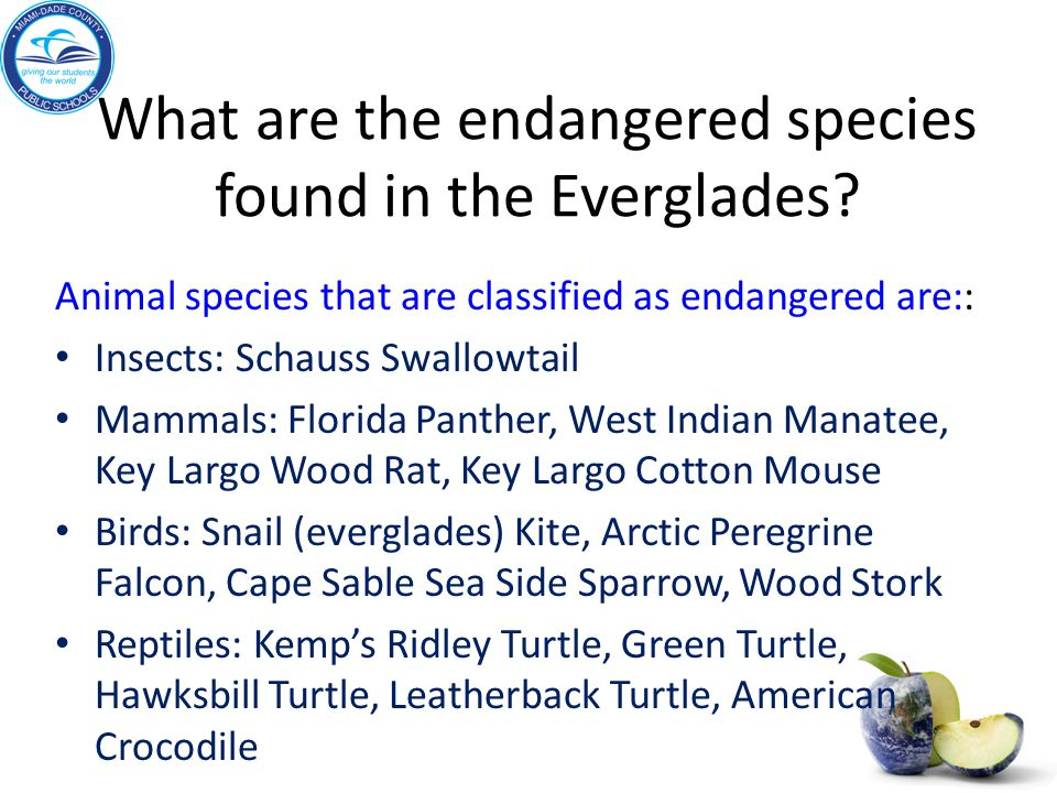What are the endangered species found in the Everglades