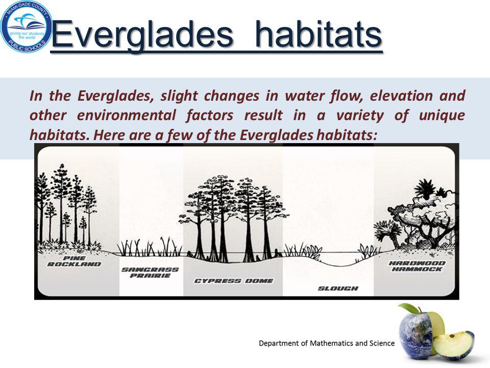 Everglades habitats