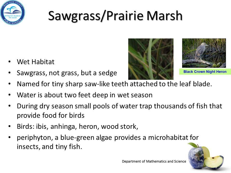 Sawgrass/Prairie Marsh