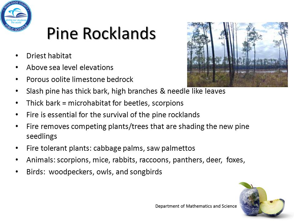 Pine Rocklands Driest habitat Above sea level elevations