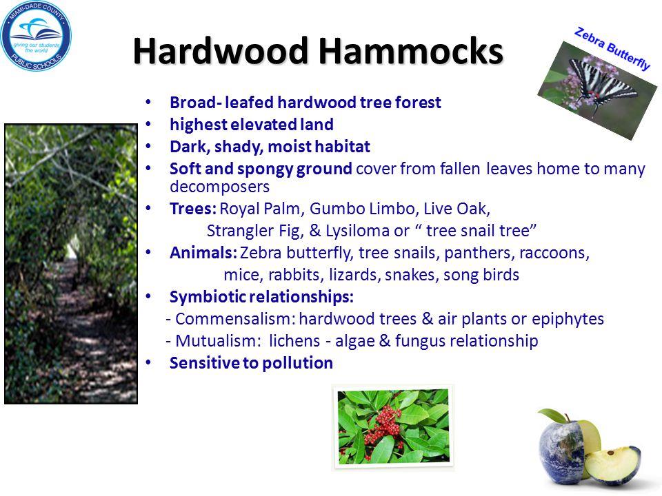 Hardwood Hammocks Broad- leafed hardwood tree forest