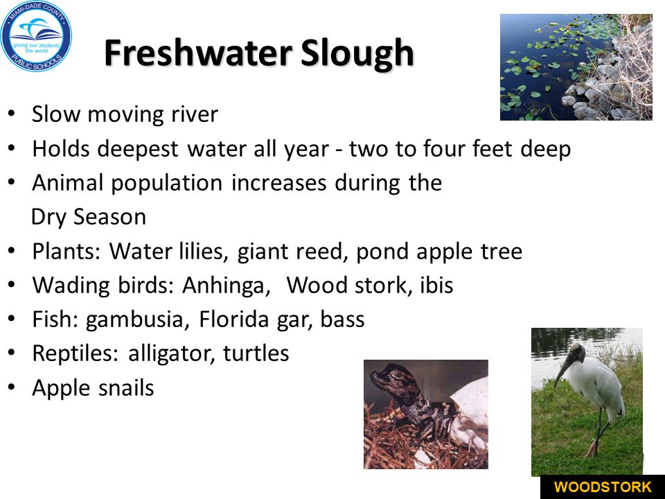 Freshwater Slough Slow moving river