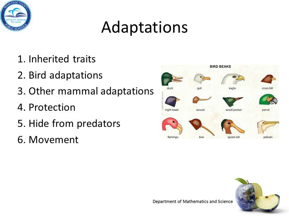 Adaptations 1. Inherited traits 2. Bird adaptations