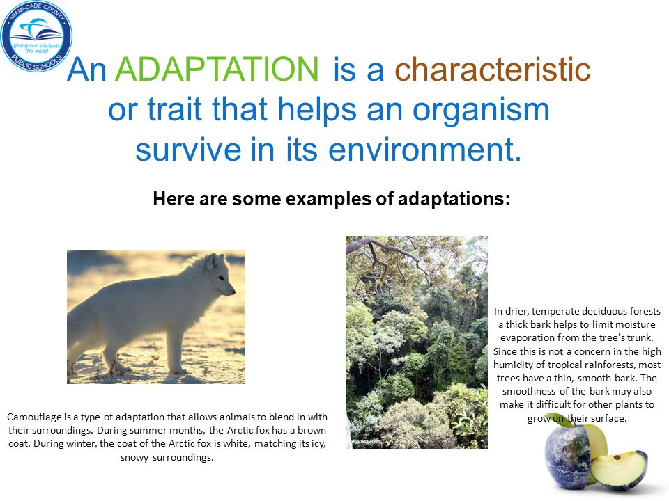 Here are some examples of adaptations: