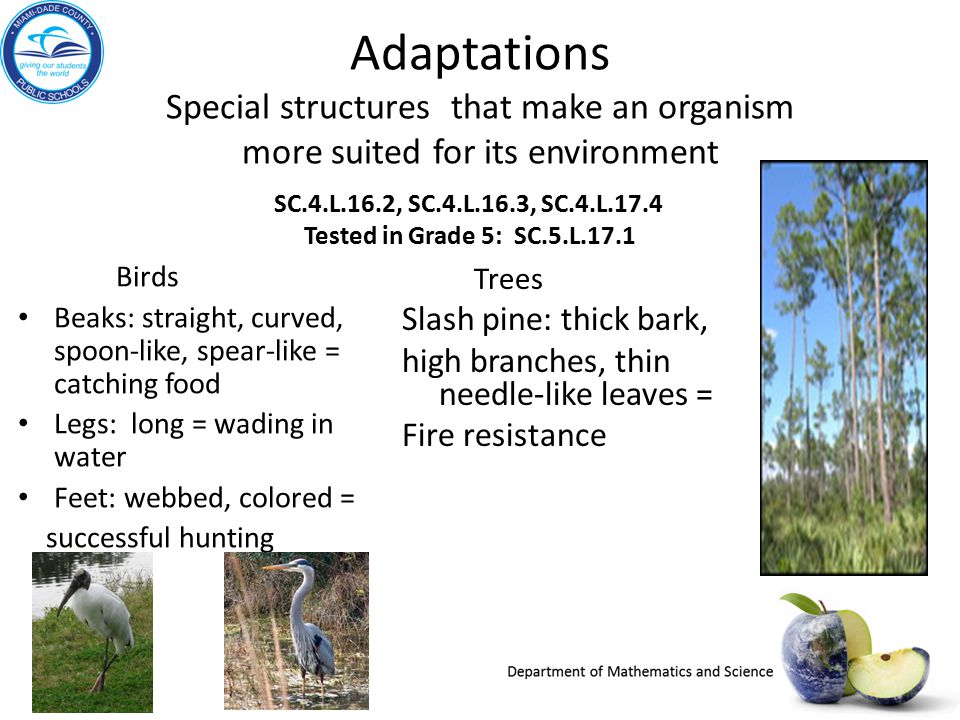 Adaptations Special structures that make an organism more suited for its environment
