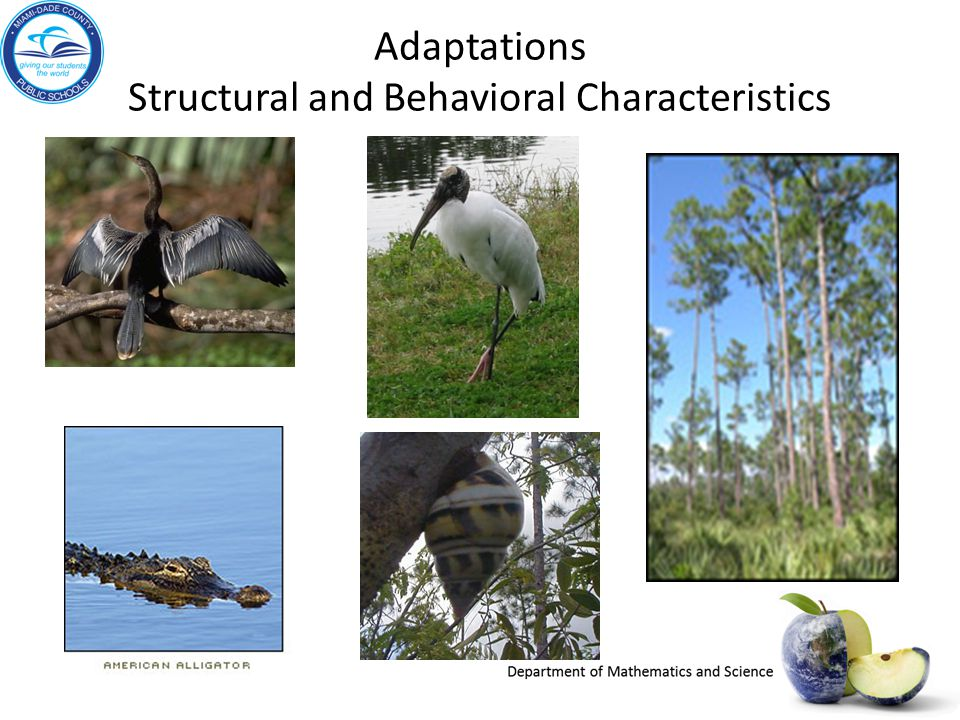 Adaptations Structural and Behavioral Characteristics