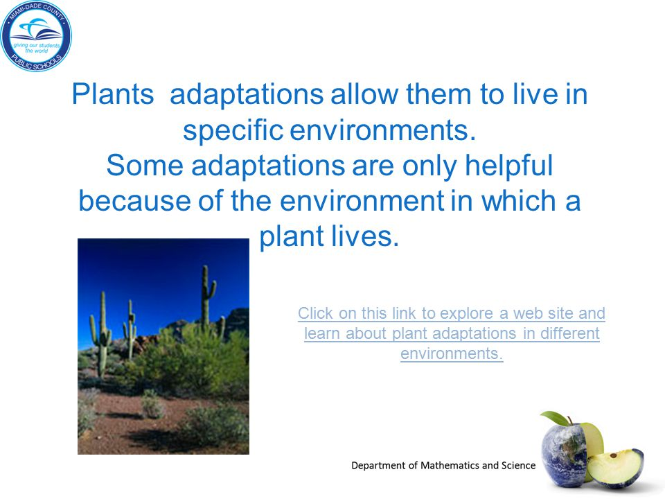 Plants adaptations allow them to live in specific environments.