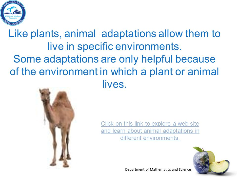 Like plants, animal adaptations allow them to live in specific environments.