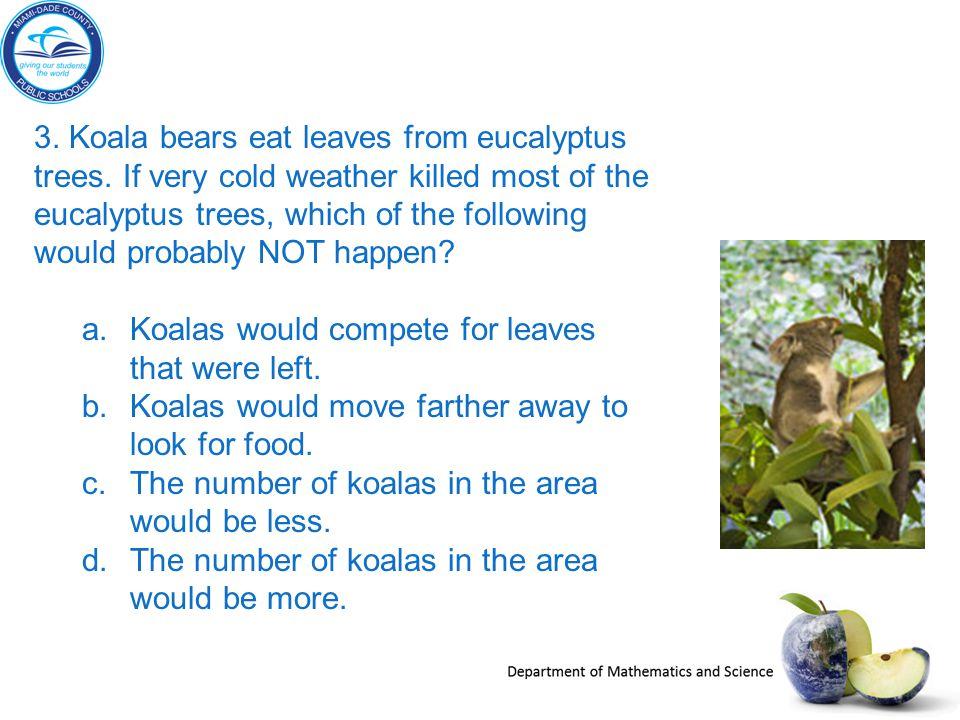 3. Koala bears eat leaves from eucalyptus trees