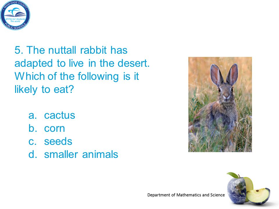 5. The nuttall rabbit has adapted to live in the desert
