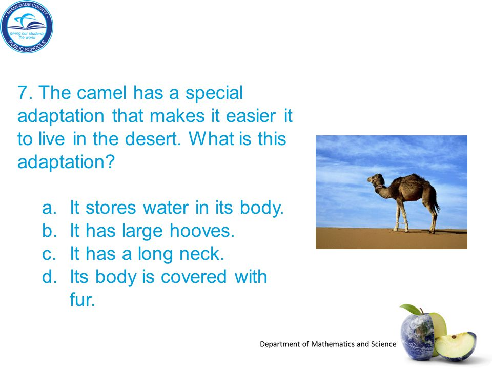 7. The camel has a special adaptation that makes it easier it to live in the desert. What is this adaptation