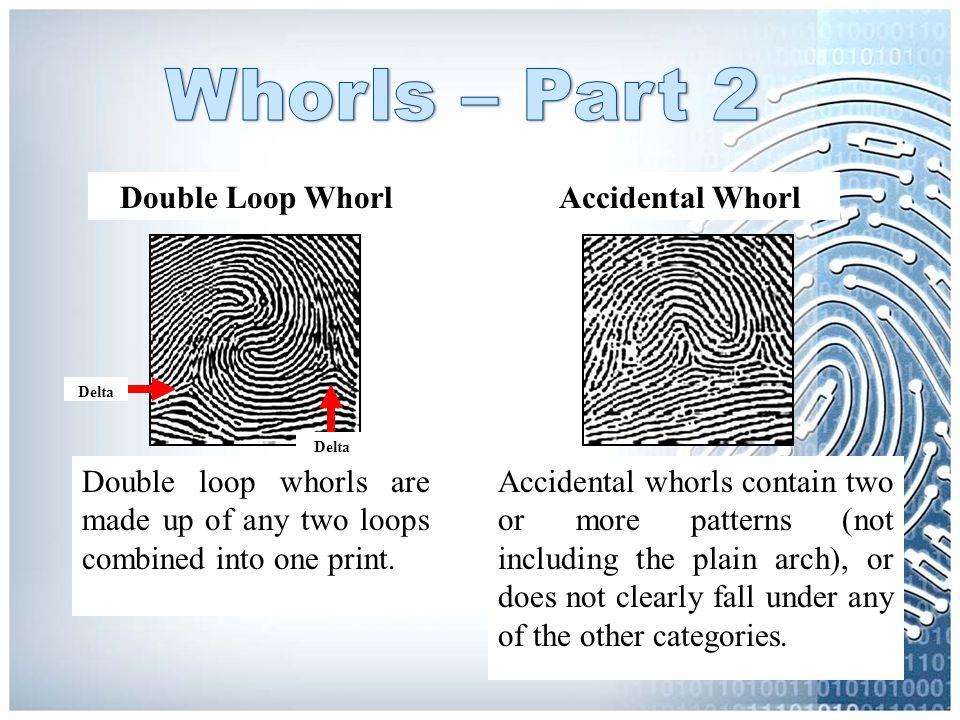 Whorls – Part 2 Double Loop Whorl