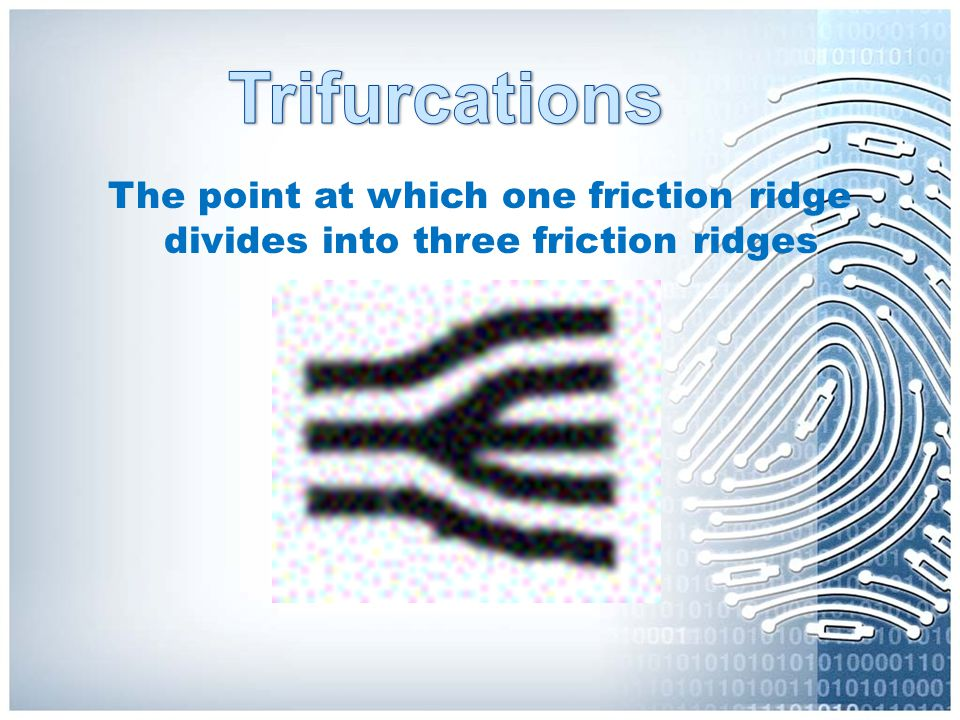 Trifurcations The point at which one friction ridge divides into three friction ridges