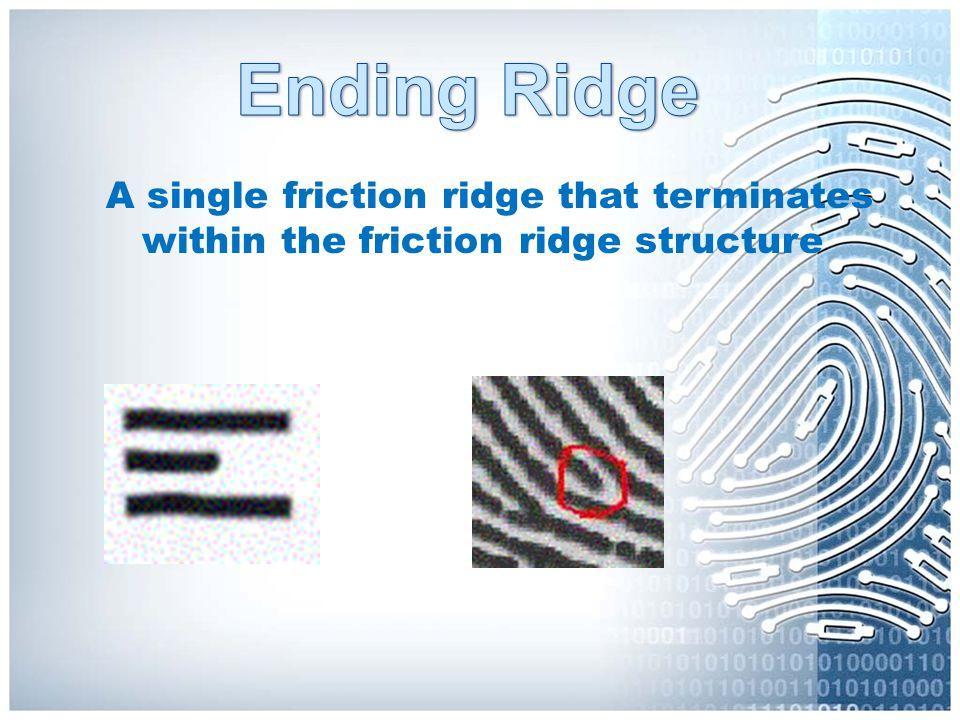 Ending Ridge A single friction ridge that terminates within the friction ridge structure